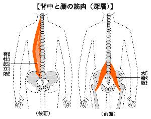 イラスト図解:腰を支える筋肉